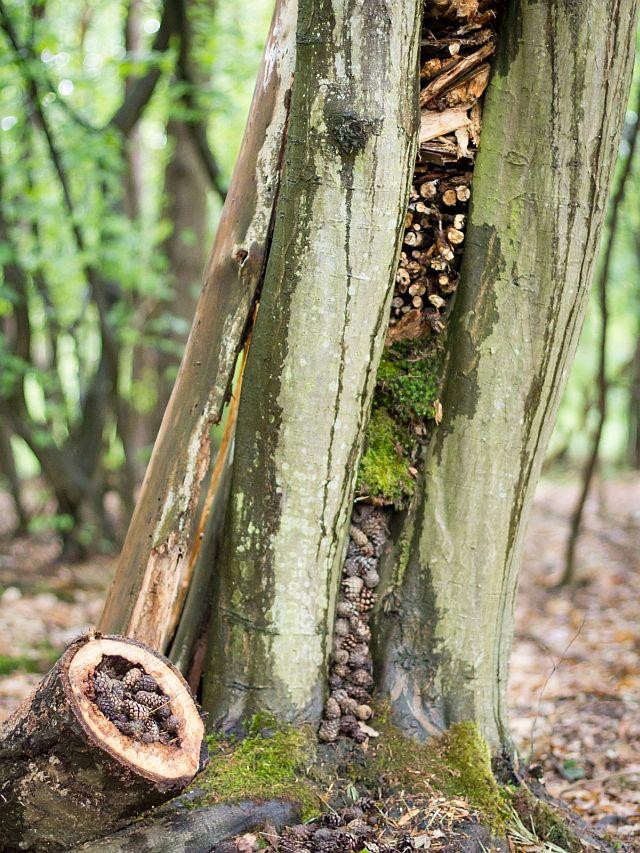 Waldkunst2